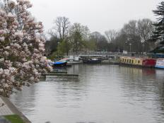 Canal Basin Blossom